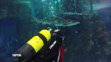 Plongée avec les requins, Capital dimanche à 21:00 sur M6
