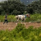 Gaza fields, ravaged by Israeli herbicides, bloom again