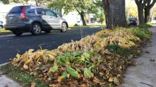 Halifax council to discuss guidelines for boulevard gardens