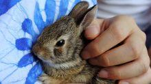 香港兔友協會呼籲: 復活節絕對不要送兔兔! #領養不棄養