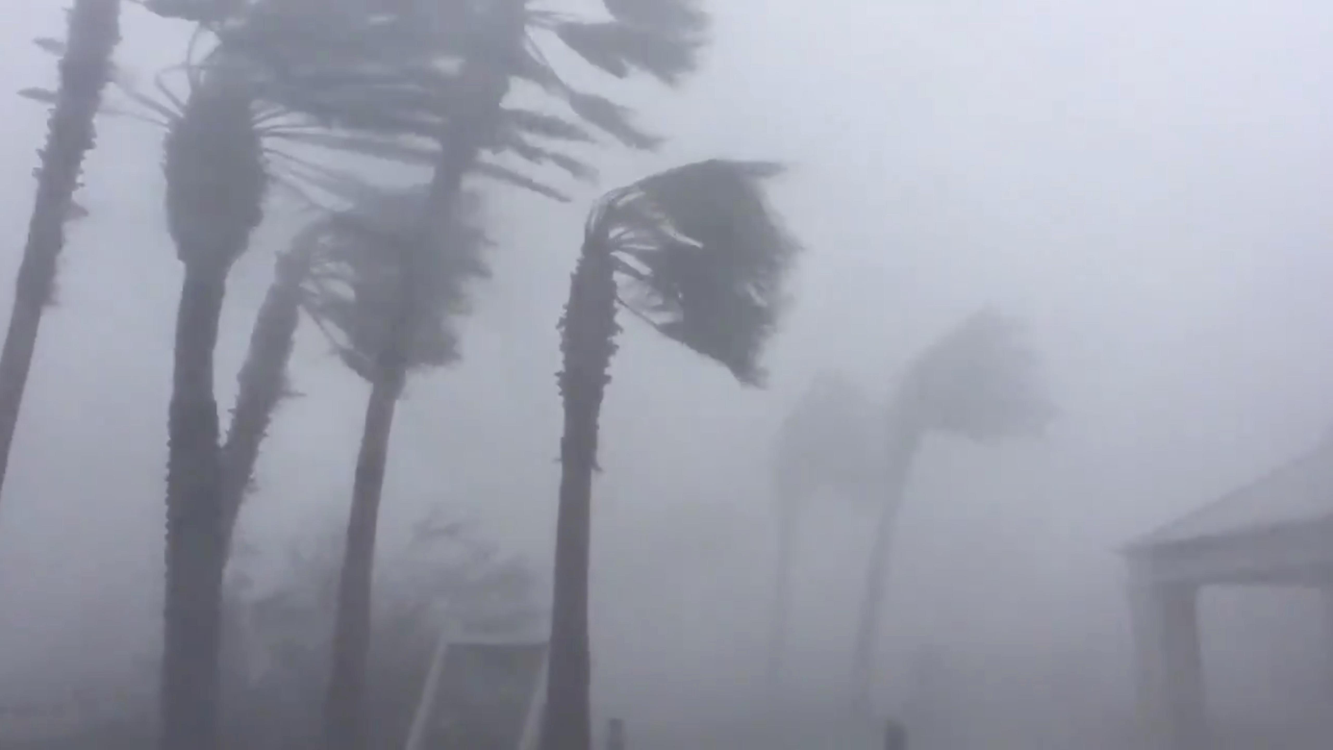 <p>Palm trees are seen during a Hurricane Michael in Panama City, Fla., Oct. 10, 2018 in this picture obtained from social media. (Photo: WeatherNation/via Reuters) </p>