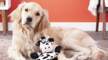 Sick of the squeaking? This dog toy is only audible to pups