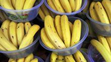 FAO pede US$ 98 milhões para combater doença das bananas