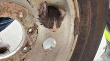 Herzzerreißend: Kätzchen steckt in Felgenloch fest