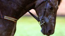 La exorbitante suma que se gastó un solo comprador en caballos de pura raza