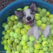 7 awesome dog videos in honor of National Dog Day