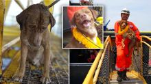 Dog rescued from 220km out at sea is unrecognisable now
