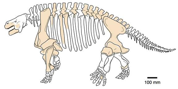 Ancient Stubby-Legged Reptiles with Tiny Heads Were World Travelers