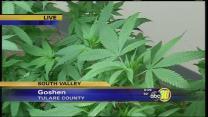 Tulare Co Supervisors against bill to regulate medical marijuana