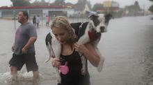 Owners rescue their dogs as Houston plunges into chaos