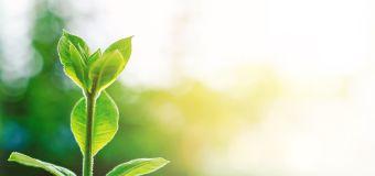 Aberdeen Standard: ecco come scegliere gli investimenti ESG