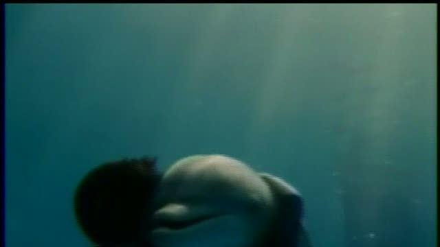 Movie. Dolphin Tale, preview