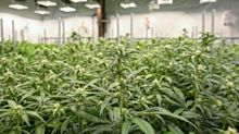 Here's How Marijuana's Top Dividend Stock Expects to Pay Shareholders More
