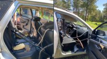 'Even bears like cracking open cold ones.' Bear trashes Colorado car with beer inside