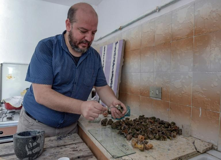 To obtain one gramme of pure purple dye, Nouira said he had to shell 100 kilogrammes of murex (AFP Photo/FETHI BELAID)