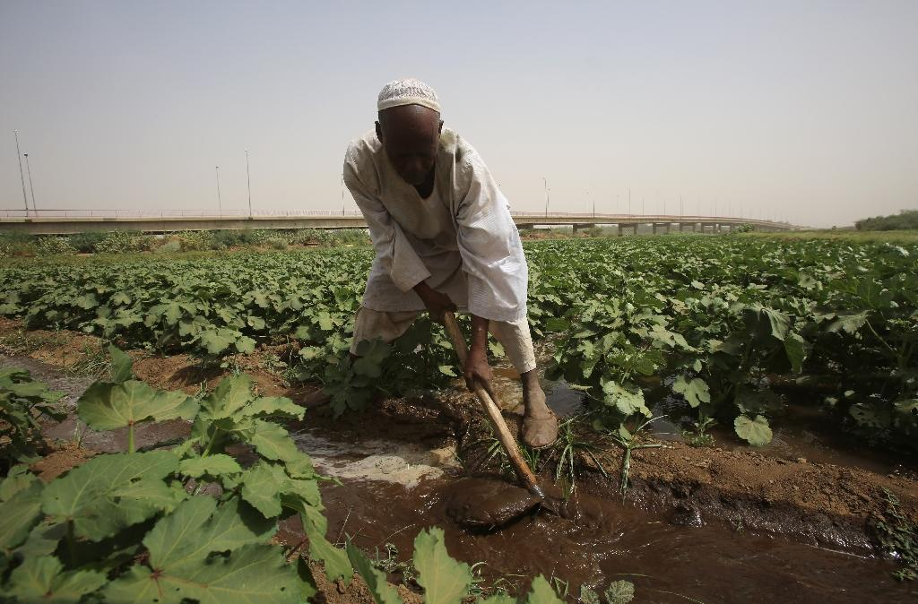 Sudanese farmers are experiencing shorter harvest seasons due to weather changes from El Nino