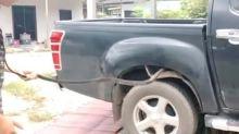 Menegangkan, Evakuasi Ular King Cobra 2,5 Meter dari Mobil Truk Pickup