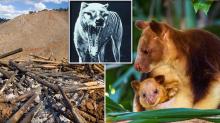 The iconic animals set to vanish from Australia in 'extinction crisis'