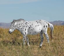 Wild Horses Can't Drag Me Away Because They Don't Exist, Genetic Analysis Finds