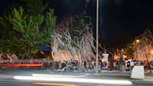 Auburn replaces Toomer's Oaks (again)
