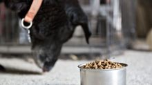 Dog Food With Legumes Tied to Pet Heart Disease, FDA Says