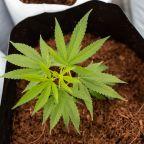 The U.K. Just Got Its First Bulk Medical Cannabis Shipment