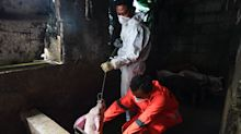 African swine fever outbreak spreads in Philippines' southern provinces