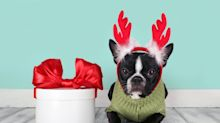 The best holiday gift ideas for the pet lover in your life