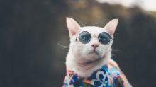 Las imágenes y videos más tiernos y curiosos en el Día Internacional del Gato