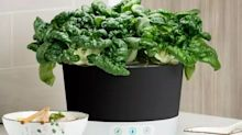 Save 30% on this indoor grow kit that's perfect for small spaces