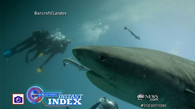 Instant Index: Diver Gets Close Encounter With School of Sharks