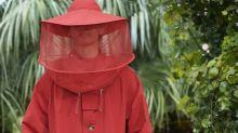 Trois petits points de mode: le miel et les abeilles de Kenzo