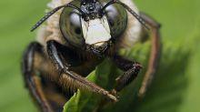 Fotógrafa registra insetos de perto para mostrar a beleza de seus detalhes