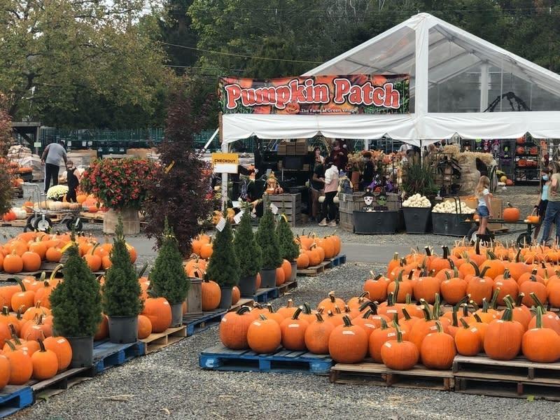 Halloween Events Near Me 2020 Dc Area Best NoVA, DC Pumpkin Patches, Halloween Events 2020