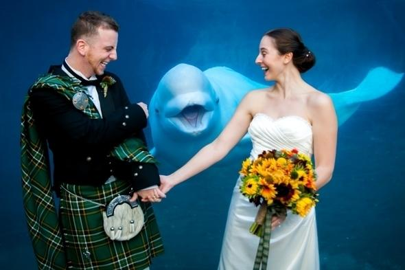 <p>Amanda Leigh and her husband Patrick were posing for photos at the Mystic Aquarium in Connecticut, USA, when 11-year-old beluga whale Juno swam behind them and flashed a big grin.</p>  <p></p>
