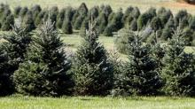 It may be harder to find the perfect Christmas tree