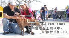 台灣工程師 義務替狗做輪椅