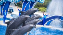 Why Shares of SeaWorld Jumped Higher on Tuesday