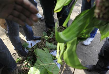 Britain should scrap plan to ban khat drug - lawmakers