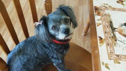 This small dog's big bark saved her owner from fire