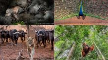 Epson Sponsors Nature's Best Photography Awards for Seventh Consecutive Year