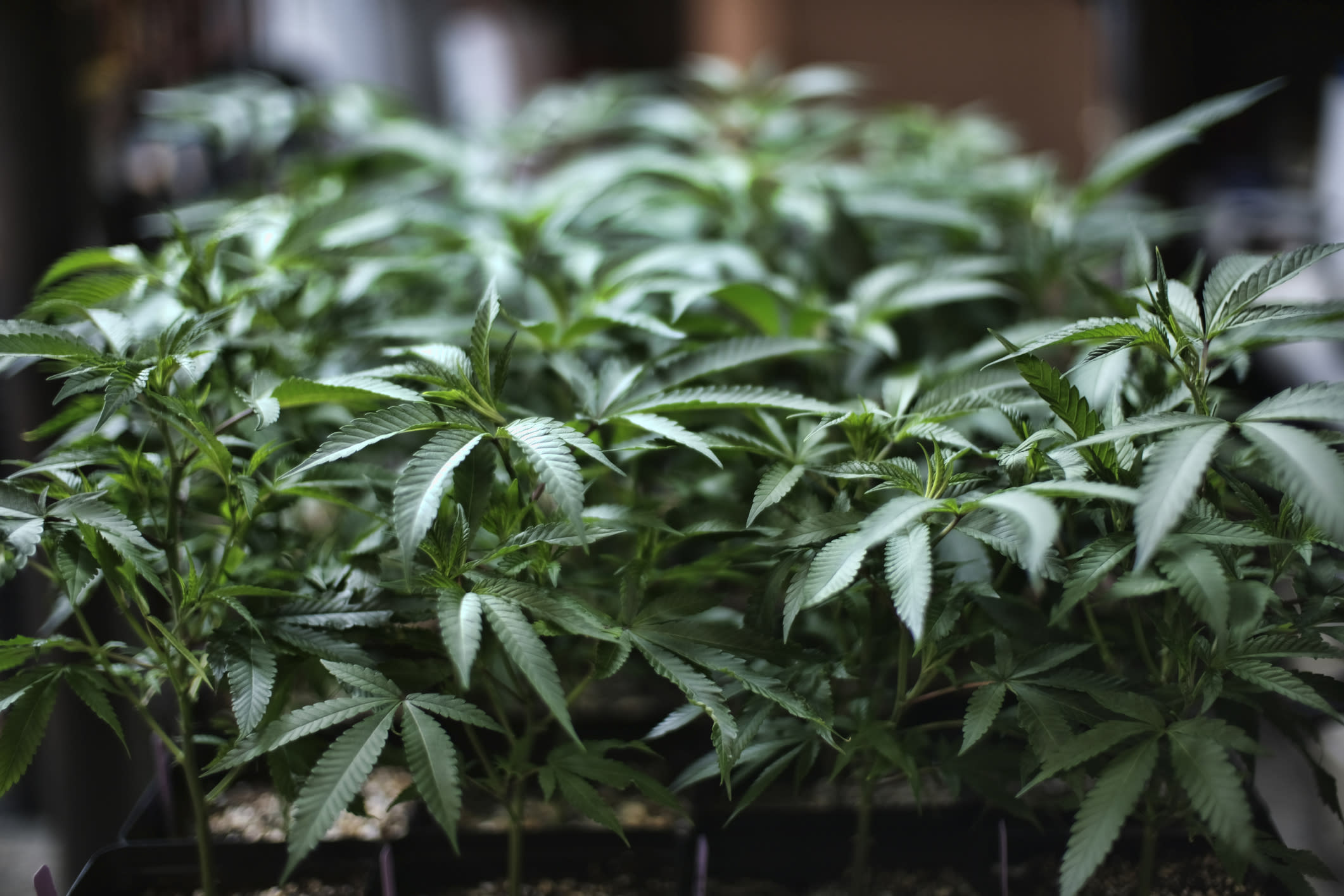 Pot stocks 'significantly oversold': ETF manager