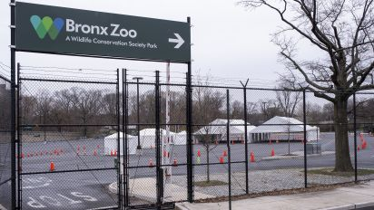 Bronx Zoo is closed, but the animals don't mind