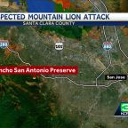 Child injured after suspected mountain lion attack at Santa Clara County nature preserve