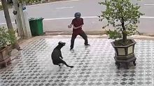 Hombre ahuyenta a perros agresivos con su kung fu... y sin tocarlos