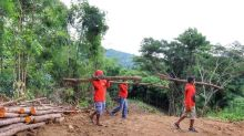 City Hall to face 3 violations for cutting trees in Guba