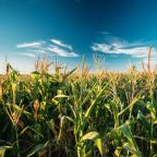 Wet US Conditions Boost Corn, Wheat Prices