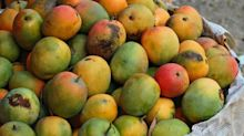 Scientists Grow Mangoes in Space