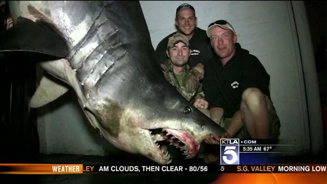 Possible World-Record Shark Caught Off SoCal