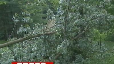 Trees Topple, Destroy Memorial In Murrysville